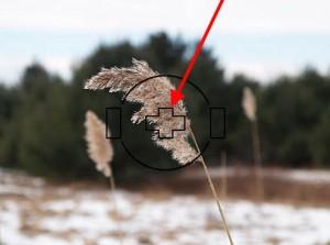 在草上進行點測光