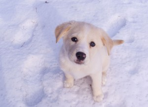 If you change the white puppy effect, it will not be so prominent. Photo by {link: http: //www.flickr.com/photos/laserstars/3086132328/} jpctalbot {/ link}