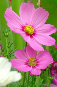 Only one or two flowers are taken for close-up, with a prominent theme