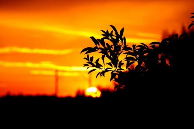 嘗試利用其他東西來襯托出夕陽。(Photo by Kamil Porembiński)