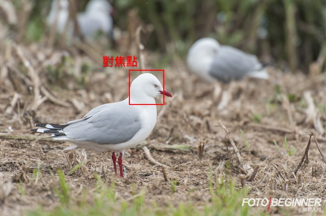 Focusing accurately on the subject ensures that the subject is within the depth of field.